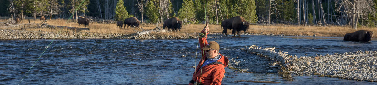 Fly fishing Yellowstone National Park