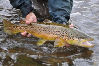 Blackfoot River Brown Trout Fishing