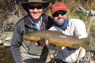 huge brown trout guided trip fly fishing montana