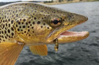 adventure guided fly fishing trip montana yellowstone national park