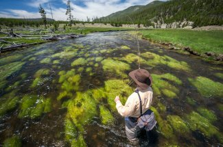 The Gibbon River in Yellowstone National Park resembles a big spring creek
