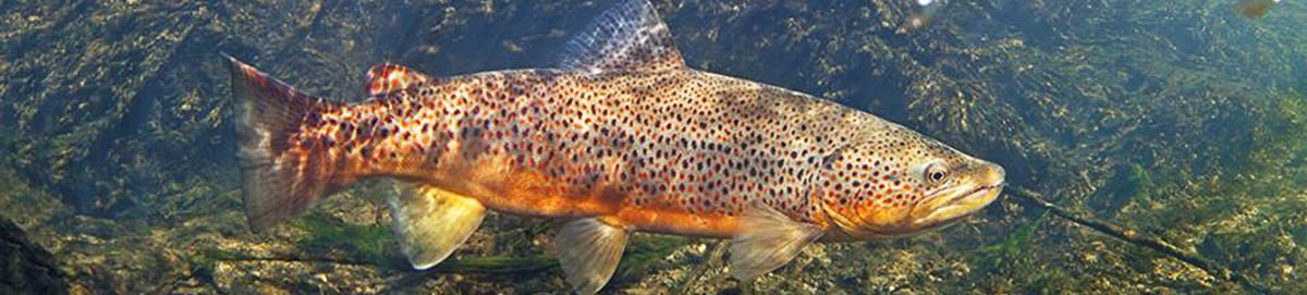 Montana fishing photos