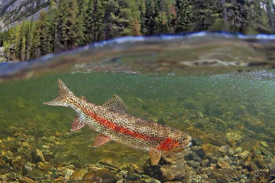 Fly Fishing Rock Creek