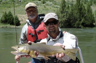 guided montana yellostone national park fly fishing brown trout