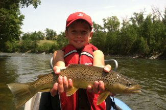 brown trout montana adventure fly fishing guided trip