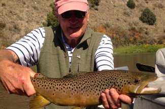 river brown trout montana fly fishing guided trip