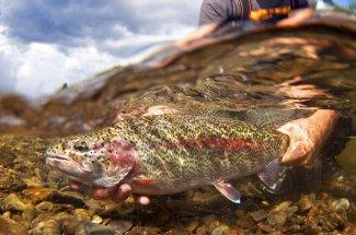 underwater shot rainbow trout guide montana fly fishing yellowstone