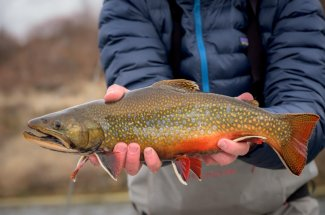 Georgetown Lake is known for good fishing for Brook Trout