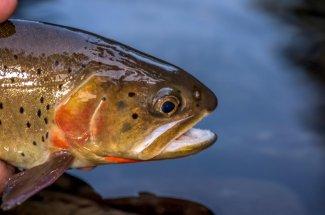 Fly Fishing Flathead Lake in Montana
