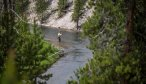 Fly Fishing the Gibbon River in Yellowstone National Park